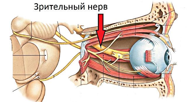 ЧАЗН - частичная атрофия зрительного нерва глаза - причины ...